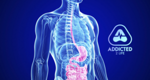 why is your gut health so important